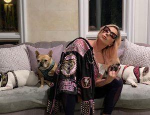 Lady Gaga kaçırılan köpeklerini getirene 500 bin dolar ödül verecek