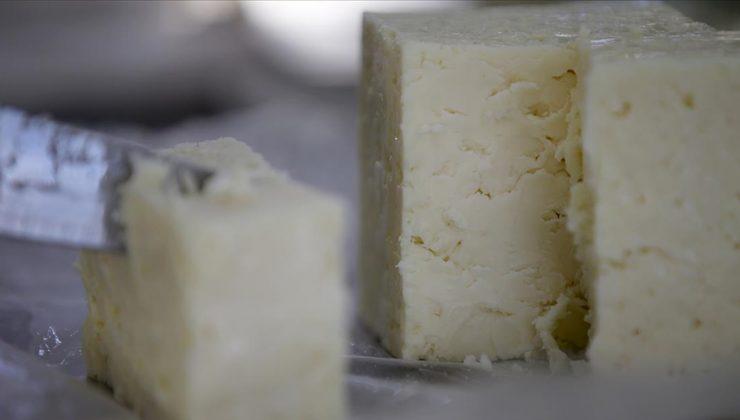 Peyniri buzdolabında saklarken dikkat!