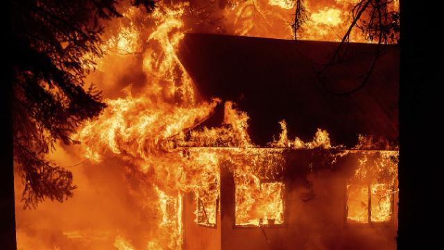California'da orman yangınları sürüyor