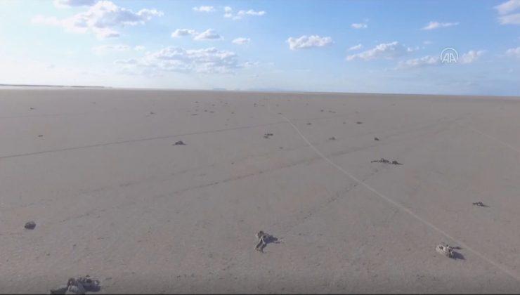 Tuz Gölü'nden acı görüntüler… Yüzlerce flamingo ölü bulundu
