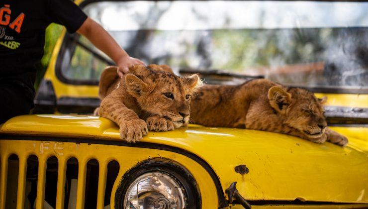 Ankara'nın sıra dışı aslan parkı