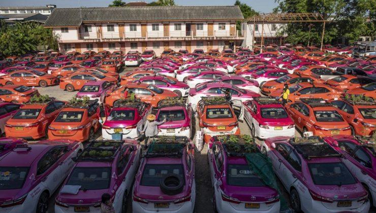 Kullanılmayan taksiler sebze bahçesine dönüştürüldü